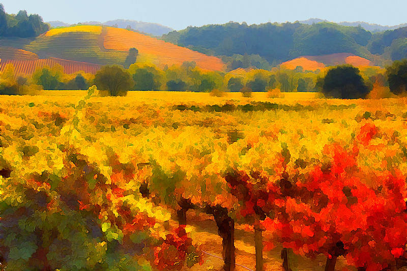 ART - Vineyard Impressions - Autumn #12