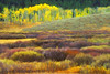 Autumn Subtle Colors in Willow Bog