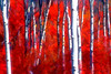 Red Brush with Aspens