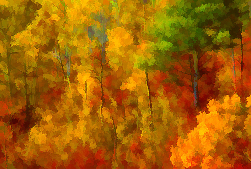 Aspens in Autumn #4