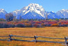 Mt  Moran Behind Fence and Brush in Autumn