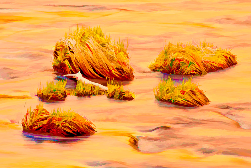 ART-Grass Tussocks on Merced River at Sunset in Yosemite #1