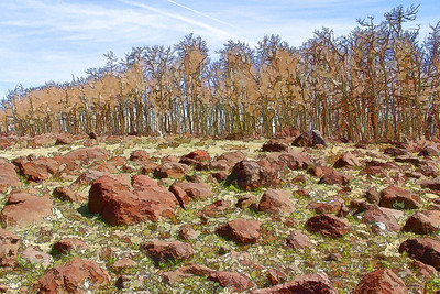 Boulders and Aspen on Boulder Mountain