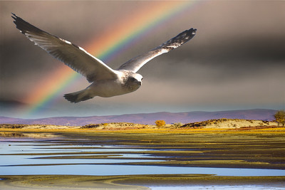 The Seagull and the Rainbow