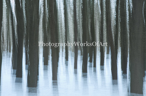 Snowy Forest Impression