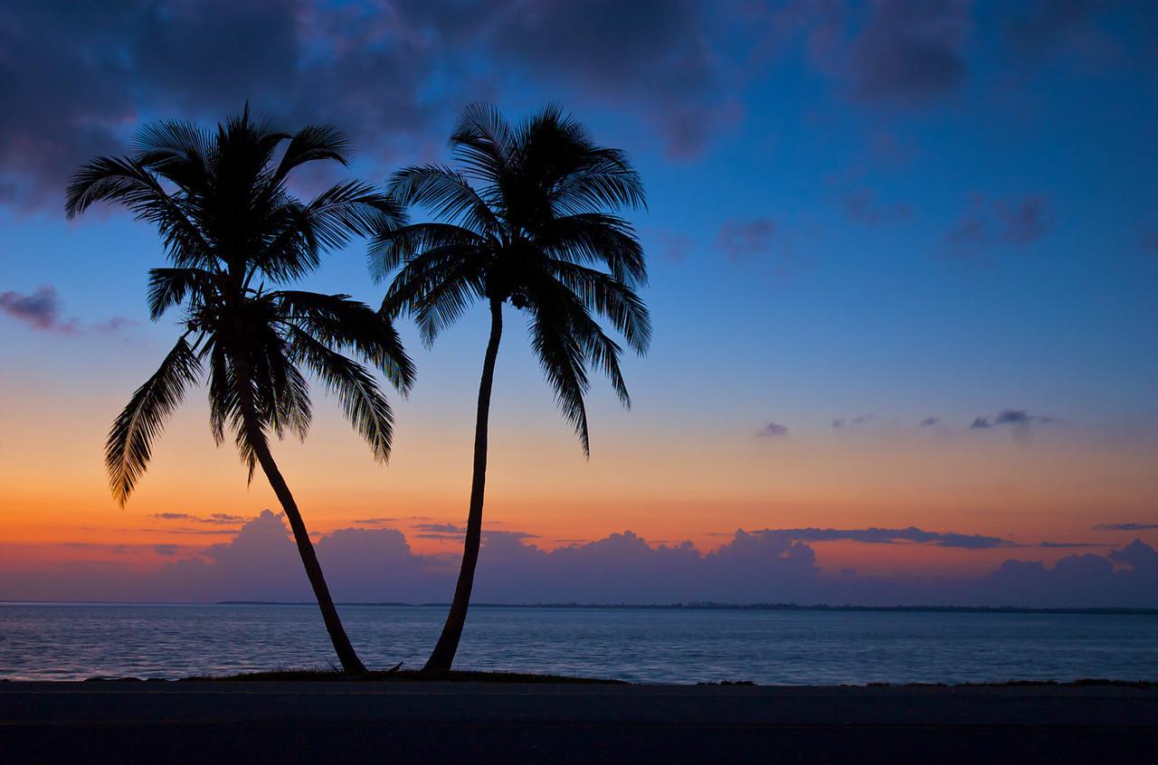 Silhouetted Palms<br /> Sanibel Island, Florida, USA