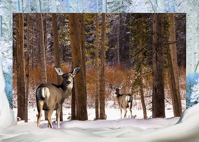 Deer in Winter Collage