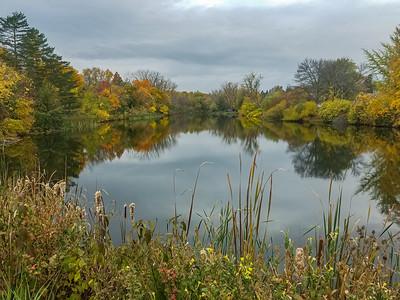 Buckingham Pond 2020