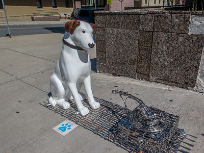 Pawsome in Downtown Albany 2017