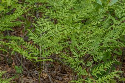 Pine Bush