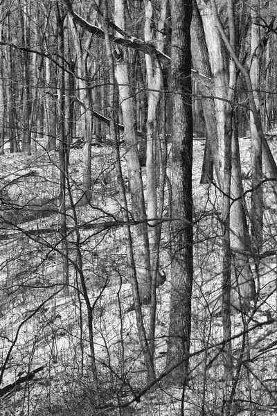 Through a Snowy Woods