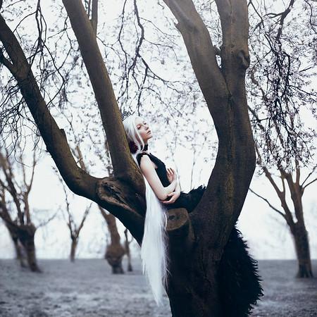 The Crow Queen's Dream