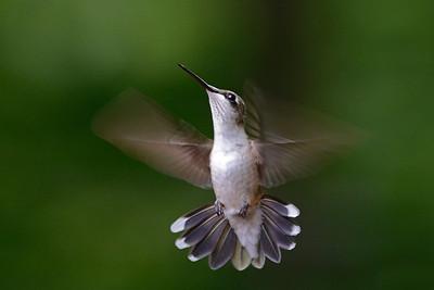 Winged Lightening