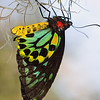 Butterfly World : 3 galleries with 60 photos