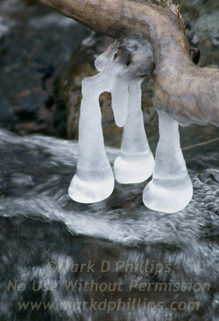 Ice forms on branches above stream at Blandford Ski Area in Blandford, MA.