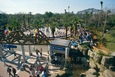 Building and opening of Lowry Park Zoo in Tampa, Florida