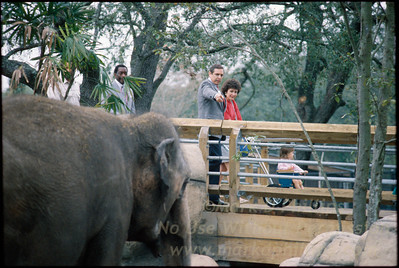Governor Robert Martinez  tours before the opening  of Lowry Park Zoo in Tampa, Florida