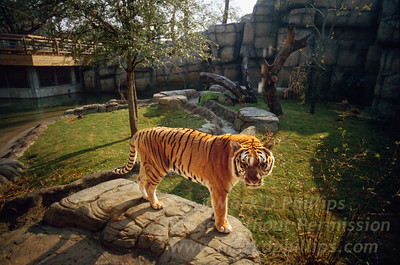Animals at Lowry Park Zoo in Tampa, Florida