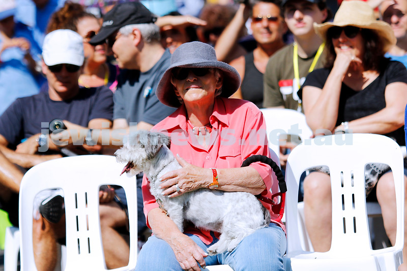 It's a dog life… and a pretty good way to spend a sunny Sunday afternoon. Audience members — two-legged and four-legged alike — enjoy the live stage performances at In One Voice. Photo: Peter Haskin