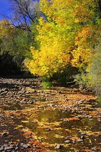 Fall's Reflection, Clear Creek, Golden, Colorado