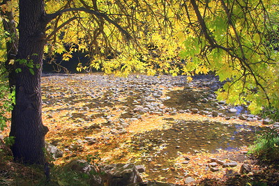 Falling Leaves, Clear Creek, Golden, Colorado