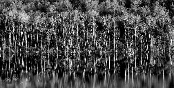 Autumn Reflections - 10x20 Black and White Metal Print $110