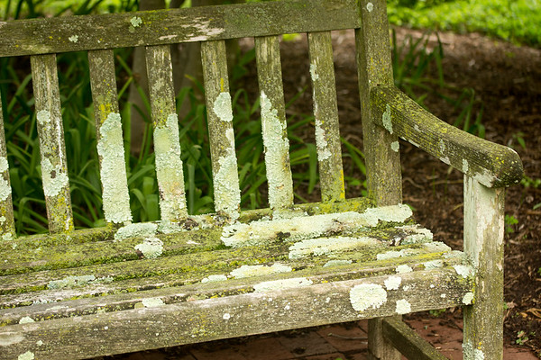 Moldy Bench 2