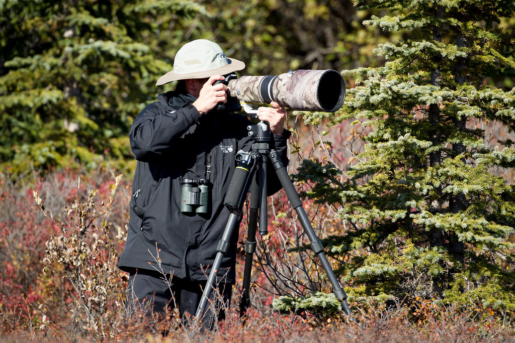 Photographing moose in Denali National Park, Alaska. Photo by Ben Clewis.