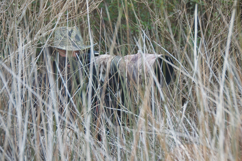 Hidden....near Jack's Pond area of Bull Island, SC.