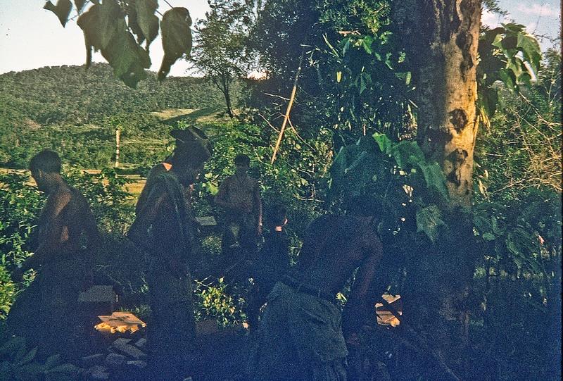 In the bush