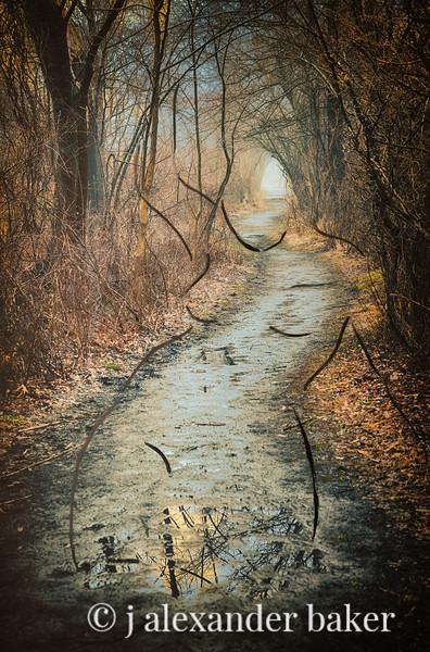 Dryad's Path
