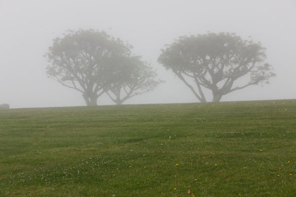 Foggy Morning on the Pepperdine U. Campus