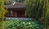 IMG_7611 Tea House Lotus in fg