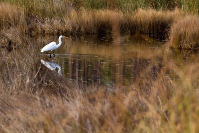Big Branch Marsh in Lacombe