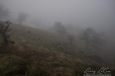 Fog in Bear Valley