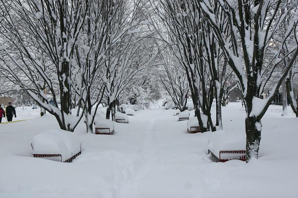 Feb 6, 2010 Snowstorm - Arlington