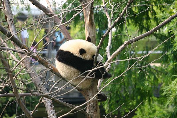 National Zoo - 7/06