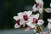 Orchids 3/2008