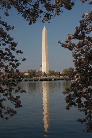 Washington DC Cherry Blossoms 2006