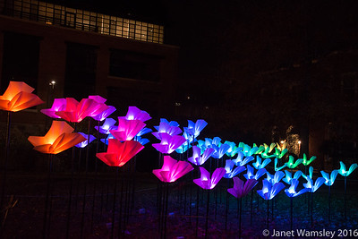 2016 Georgetown Glow