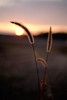 Last Grass