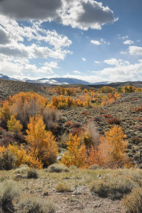 Fall color, Cottonwoods, Sagebrush
