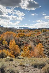 Fall color, Cottonwoods, Sagebrush