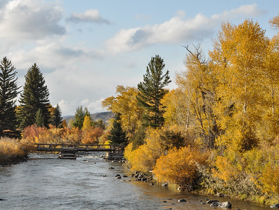 Fall color, Wind River, Cottonwoods
