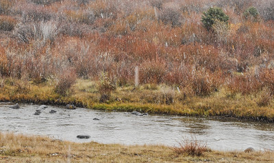 , Wind River, fall color