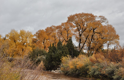 Cottonwood Fall Color, Wind River