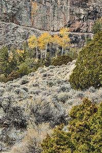 Fall color, Aspen, Cliff face