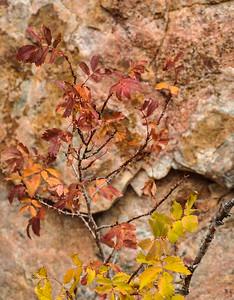 Lichen covered rock, Wild Rose bush