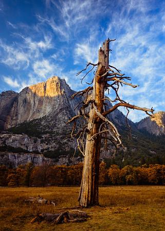 Yosemite-Reno%20Trip