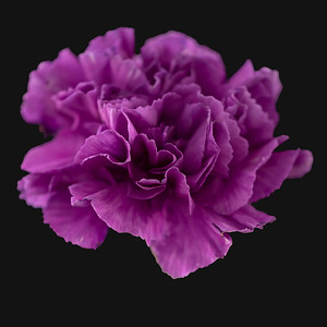 Glowing in purple